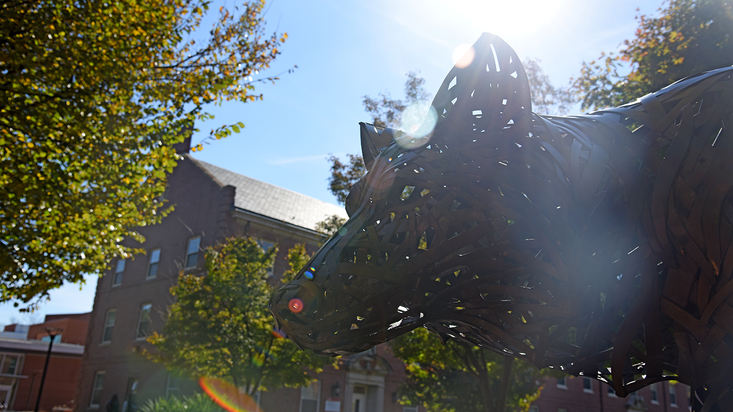 A copper wolf on NC State's campus caught in a sunbeam.