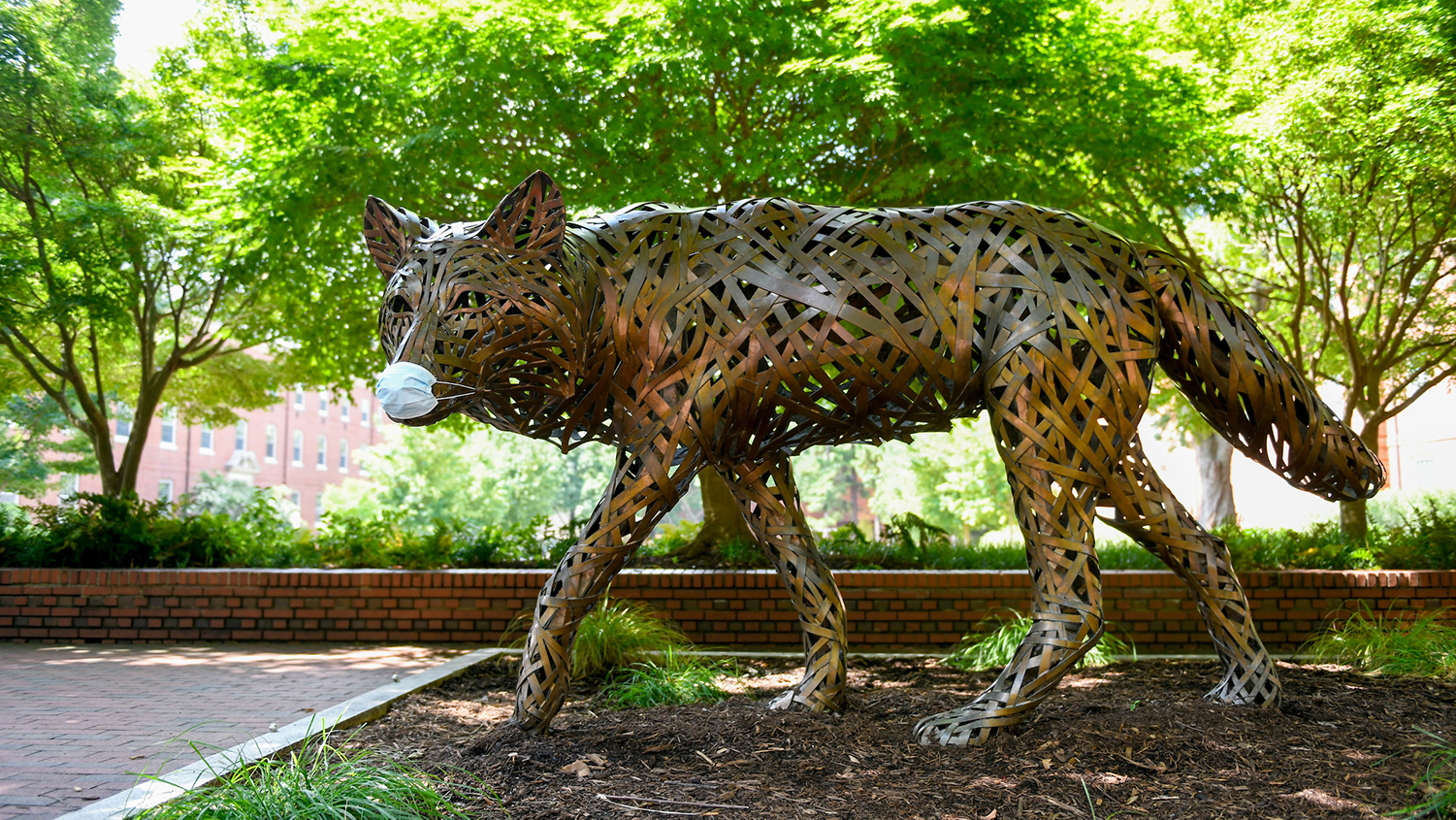 A bronze wolf statue on NC State's campus dons a protective mask.